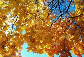 Моя осень солнечного цвета