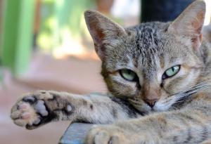 «Кошка, которая гуляет сама по себе»