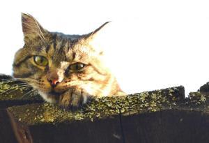 Кот, который живет на крыше