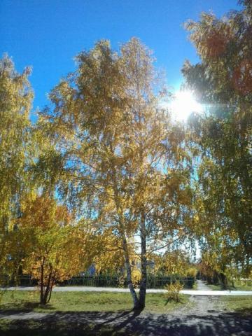 Осенние берёзки