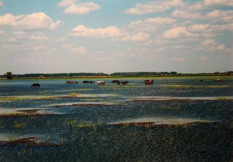 Астраханские степи весной