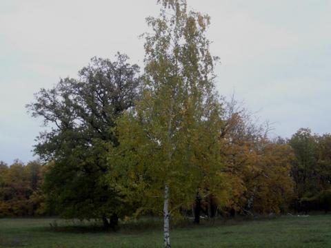 Золотая осень родного края
