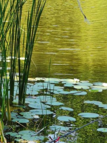 Золотое озеро.