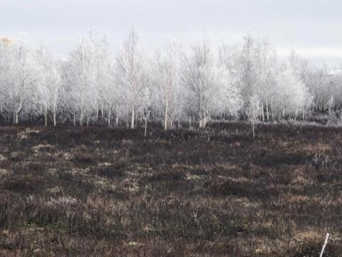 Осенняя тундра в октябре