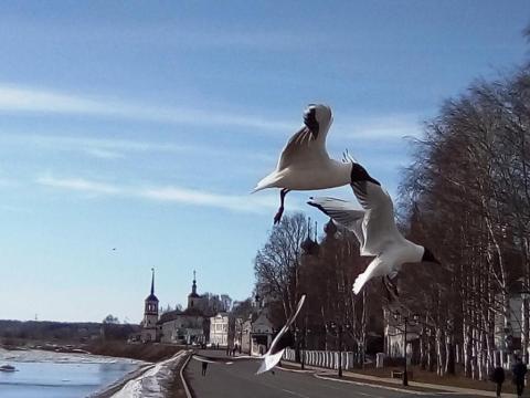 Полет птиц
