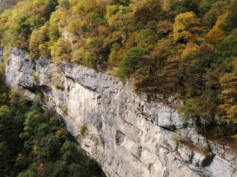 Горный скальный  лес густой