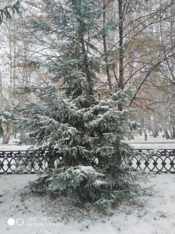 Деревья родного края