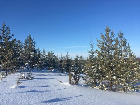 Зимняя сказка в деревне