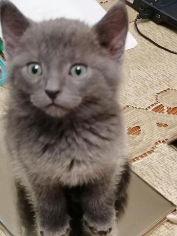 Котёнок-пантерёнок Милка