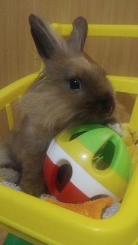 Кроляш