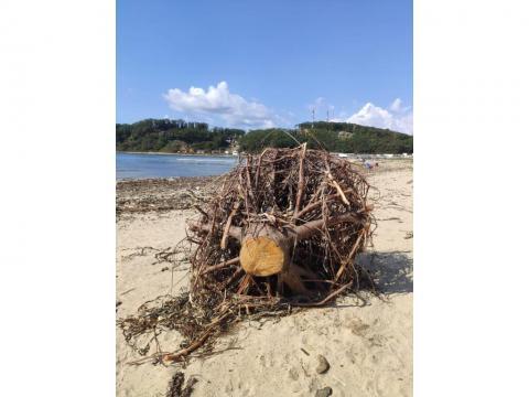 Морское перекати-поле - пляж Китайский, город Находка