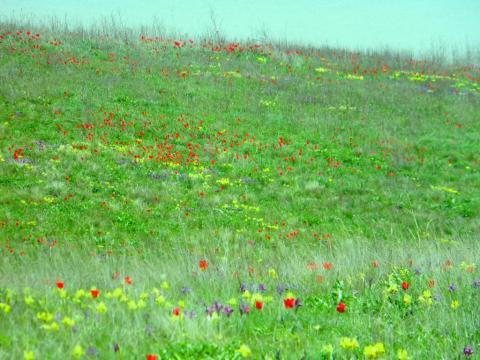 Степные первоцветы