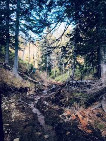 Леса Сахалина
