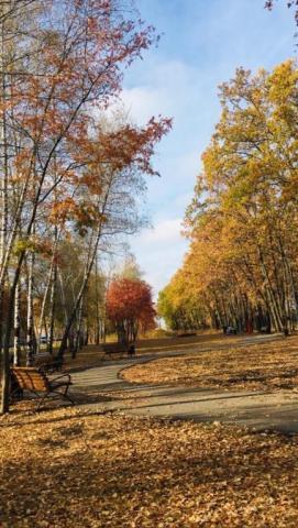 Осень!Очей очарованье!