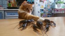 """у каждого свои тараканы"""