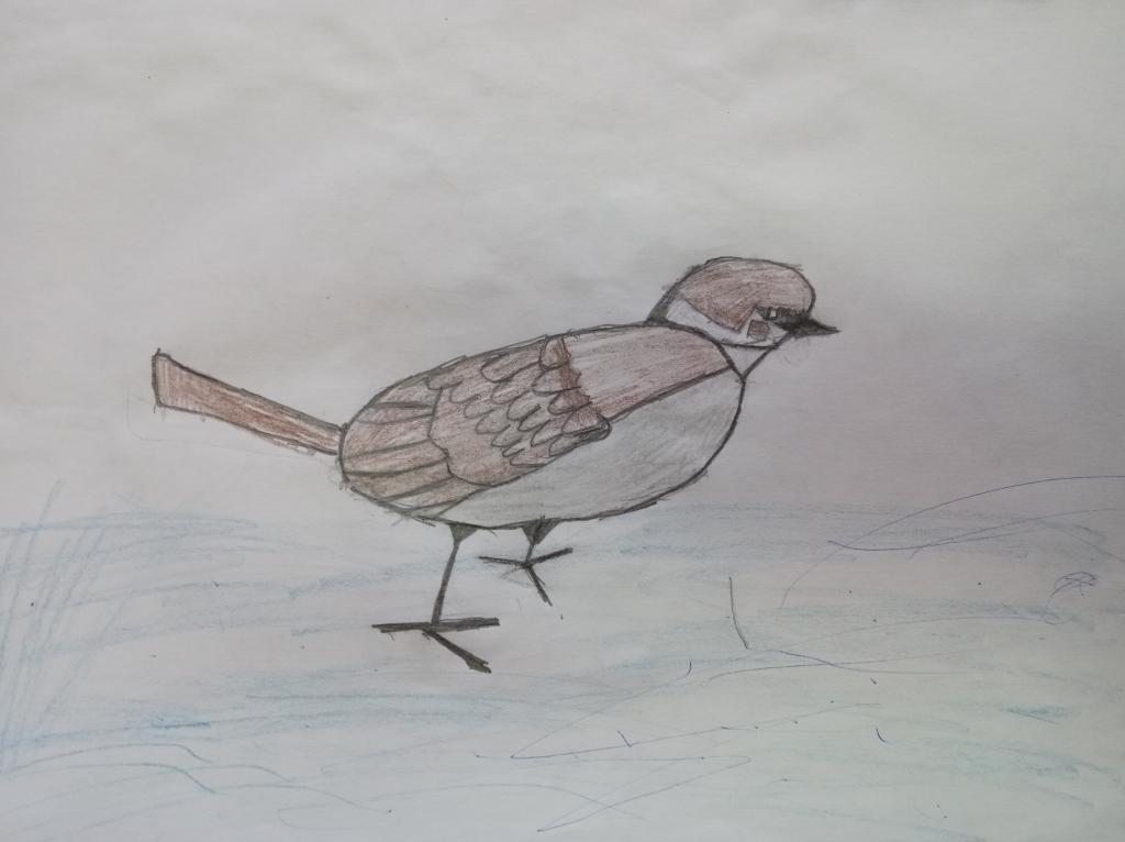 картинки птица родного края